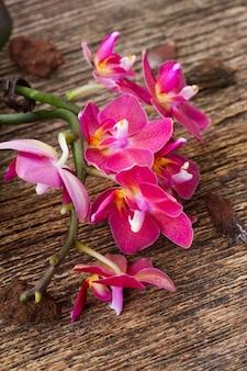 Rosa orchideenblumen schließen oben auf holztisch