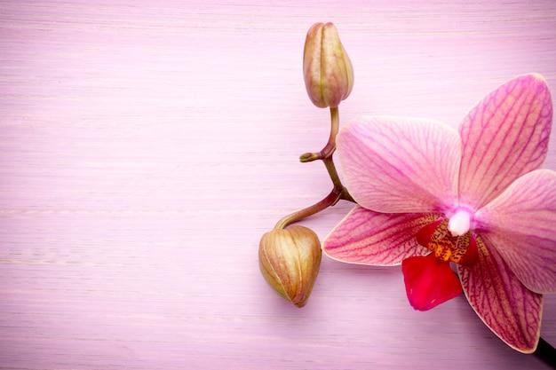Rosa orchideenblumenhintergrund