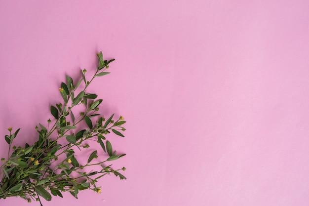 Rosa papier textur hintergrund mit pflanzen.