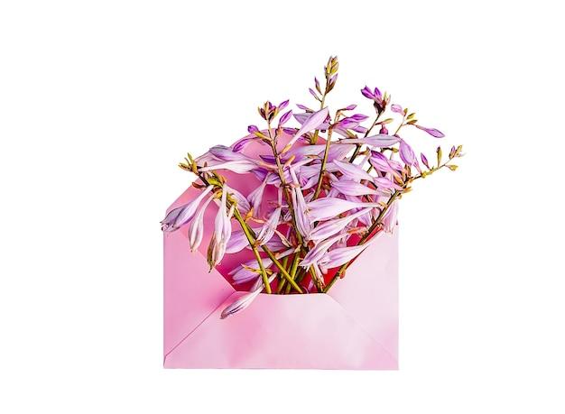 Rosa papierumschlag mit frischen lila gartenblumen auf weißem hintergrund. festliche blumenvorlage. grußkarten-design. ansicht von oben.