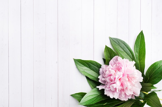 Rosa pfingstrose mit blättern auf einem weißen hölzernen hintergrund