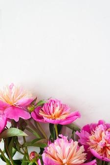 Rosa pfingstrosen auf weißem hintergrund