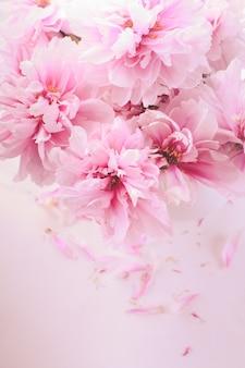 Rosa pfingstrosen in vase isoliert auf weiß