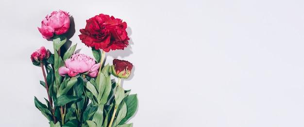 Rosa pfingstrosen und blätter mit hartem schatten auf pastellhintergrund