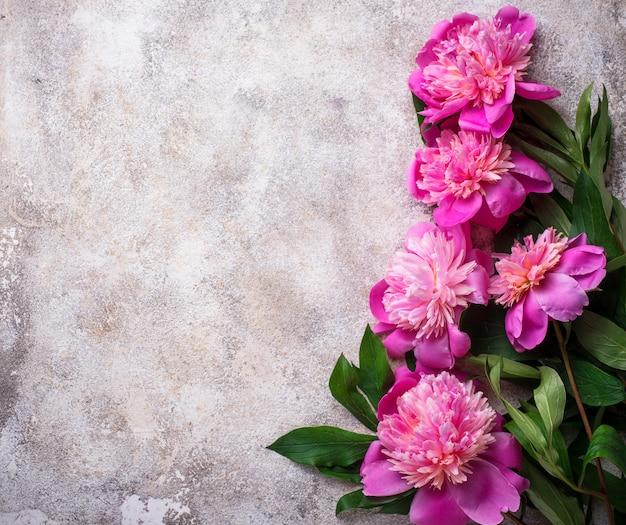 Rosa pfingstrosenblumen auf heller oberfläche
