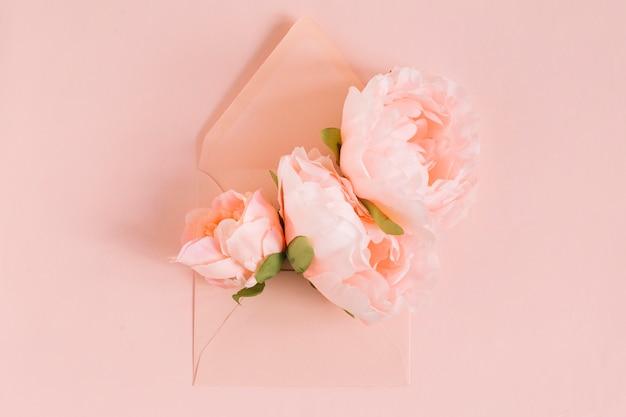 Rosa pfingstrosenblumen im umschlag auf farbigem hintergrund