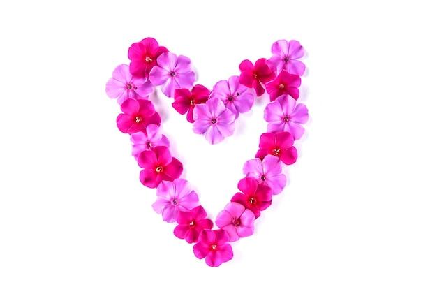Rosa phloxblüten in herzform auf weißer oberfläche. blumenrahmen.