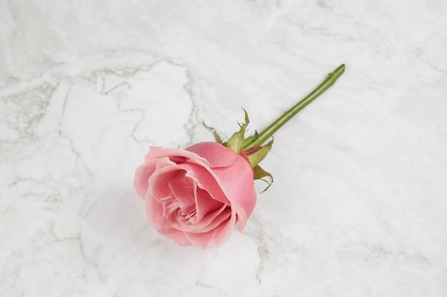 Rosa rose auf marmorhintergrund draufsicht.