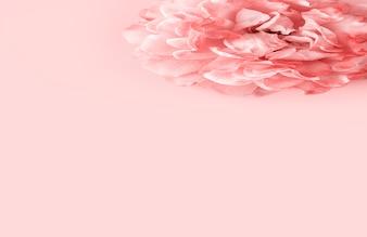 Rosa rose auf pastellrosa hintergrund, minimaler stil. flache lage, kopierraum.
