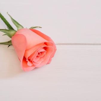 Rosa rose ruht in der oberen linken ecke in einem weißen holztisch