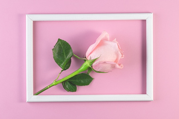 Rosa rosen auf pastellrosa hintergrund. geburtstag, mutter, valentinstag, frauen, hochzeitstag-konzept. frühlingsblütenzeit. minimale feiertagszusammensetzung. platz kopieren