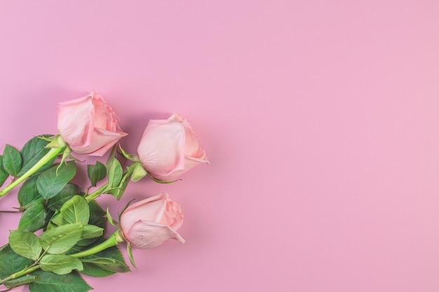 Rosa rosen auf pastellrosa hintergrund.