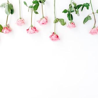 Rosa rosen auf weißem hintergrund. valentinstag hintergrund