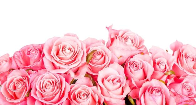 Rosa rosen lokalisiert auf dem weiß