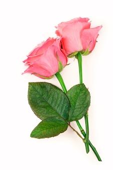Rosa rosen lokalisiert auf dem weißen hintergrund