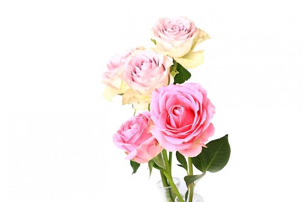 Rosa rosen lokalisiert auf selektiver weichzeichnung des weißen hintergrundes
