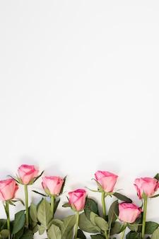 Rosa rosenanordnung auf weißem kopienraumhintergrund