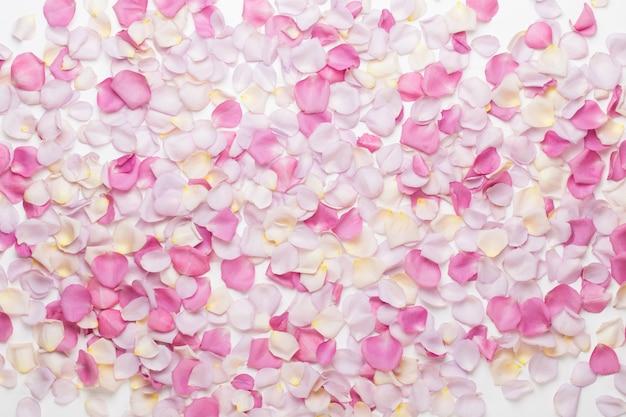 Rosa rosenblütenblätter auf weiß. flache lage, draufsicht, kopierraum.