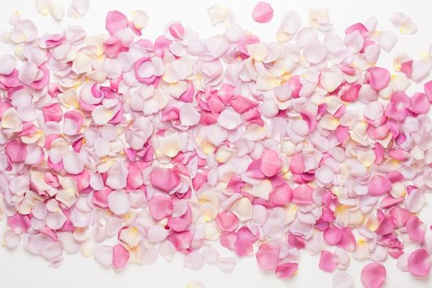 Rosa rosenblütenblätter auf weiß. flache lage, draufsicht