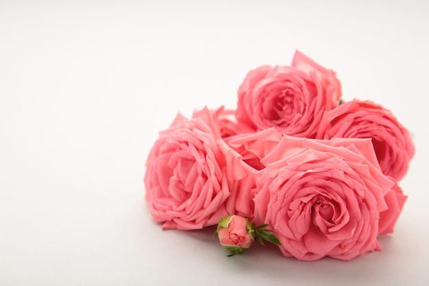 Rosa rosenblume auf grauem hintergrund. frühlingskonzept. draufsicht