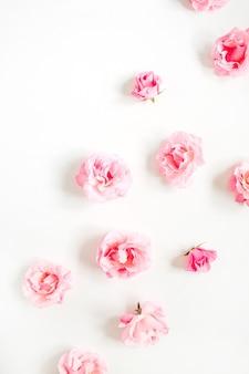 Rosa rosenknospenmuster auf weißem hintergrund. flache lage, ansicht von oben. muster von blumen.