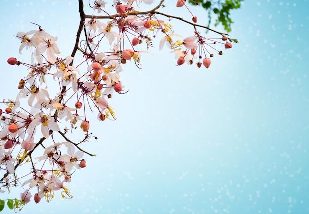 Rosa sakura-blumen