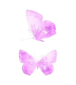 Rosa schmetterlinge isoliert auf weißem hintergrund. tropische motten. insekten für das design. aquarellfarben