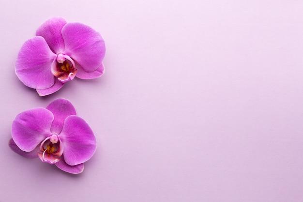 Rosa schöne orchidee auf farbigem.