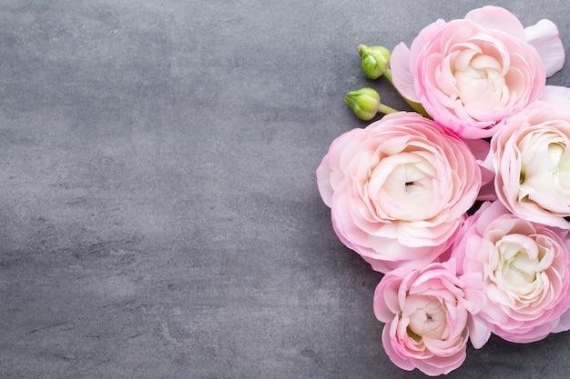 Rosa schöner ranunkel auf grauem hintergrund