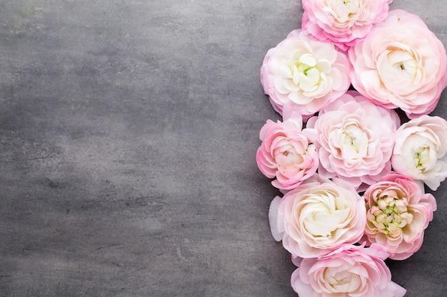 Rosa schöner ranunkel auf grauem hintergrund.