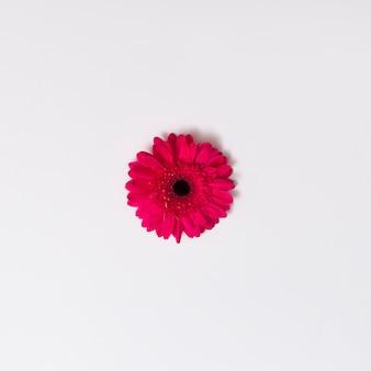 Rosa schöne Blume