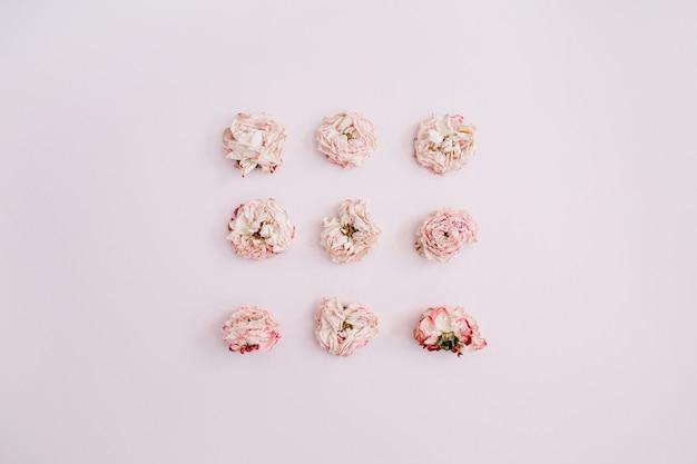 Rosa trockene rosenknospen auf rosa