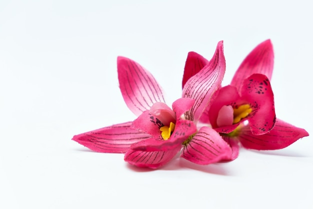 Rosa tropische blumenorchideenfrangipani auf weißer oberfläche verspotten spa-konzept