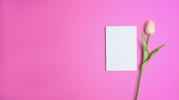 Rosa tulpe, leeres papier und kopienraum auf rosa hintergrund.