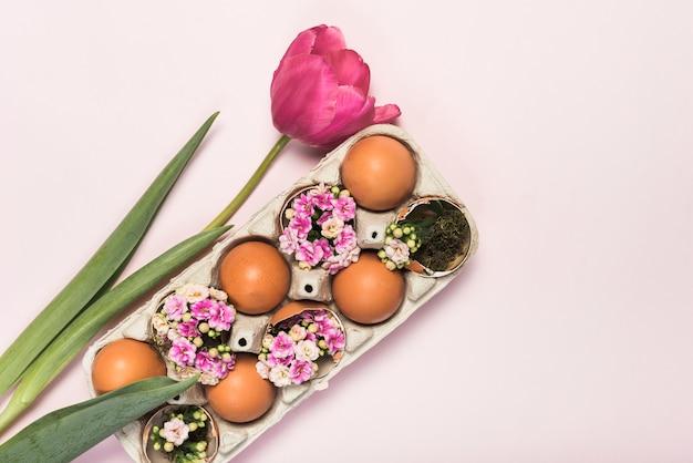 Rosa tulpe mit eiern in der zahnstange