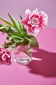 Rosa tulpe mit grünen blättern in einem transparenten glas mit einer reflexion der schatten