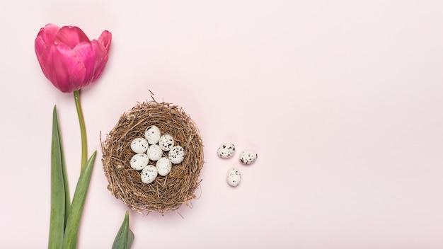 Rosa tulpe mit wachteleiern im nest