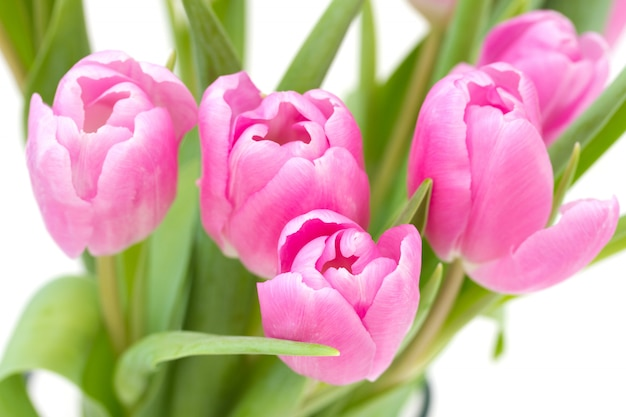Rosa tulpen auf weiß