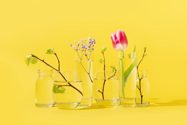 Rosa tulpen und frische birkenzweige verzerrt durch flüssiges wasser in gläsern auf gelber frühlingszusammensetzung.