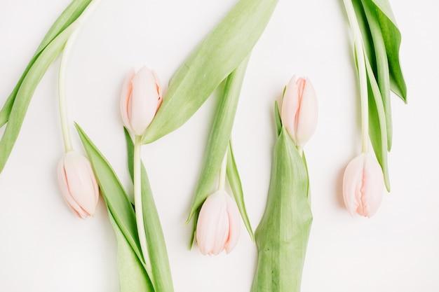 Rosa tulpenblumen auf weißem hintergrund. flache lage, ansicht von oben