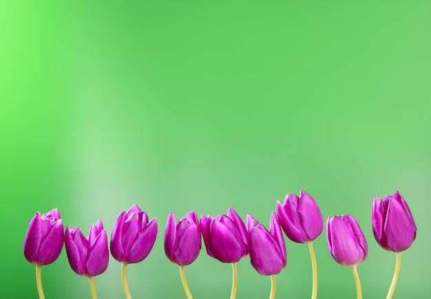 Rosa tulpenblumen in folge gruppenlinienanordnung