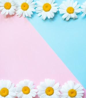 Rosa und blauer hintergrund mit kamillenrahmen. frühlings-, sommerkonzept. flach mit kopierraum liegen. schlüsselwörter sprache: englisch