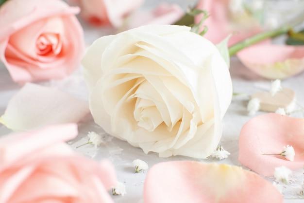 Rosa und cremefarbene rosen mit blütenblättern auf grauem hintergrund