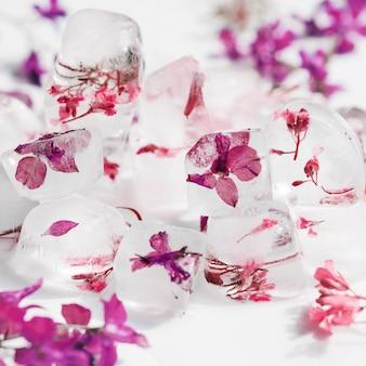 Rosa und violette blüten in eiswürfeln