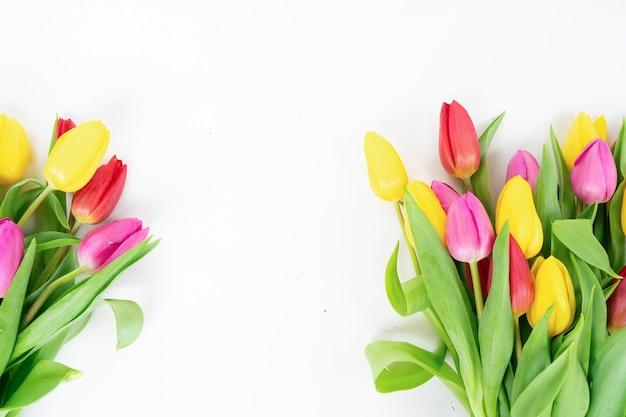 Rosa und violette tulpenblumen über weißem hintergrund mit kopienraum