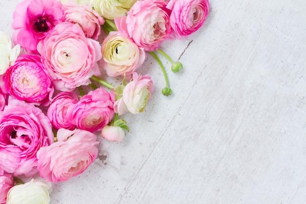 Rosa und weiße frische ranunkelblumen auf weißem hölzernem hintergrund