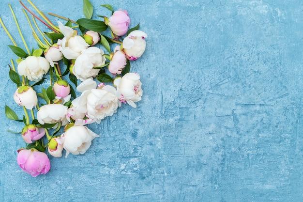 Rosa und weiße pfingstrosen begrenzen auf blauem hintergrund. kopierraum, draufsicht.