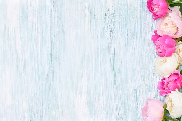 Rosa und weiße pfingstrosen begrenzen auf blauem hintergrund. urlaubshintergrund, kopierraum, draufsicht. muttertag, valentinstag, geburtstagskonzept.