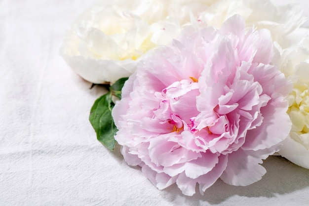 Rosa und weiße pfingstrosenblüten mit blättern über weißer baumwolltextiloberfläche