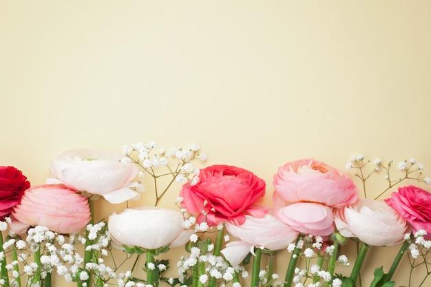 Rosa und weiße ranunculusblumen auf gelb.